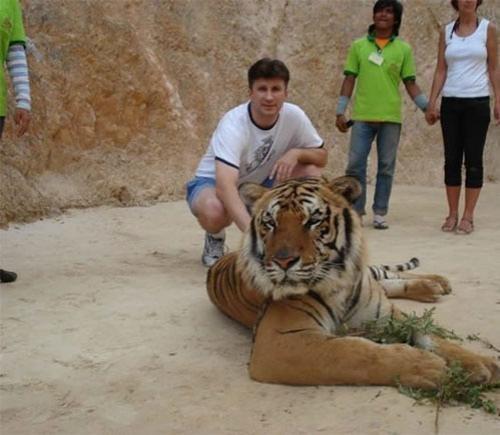 Всего в храме сейчас живёт 17 тигров. Большинство из них уже не умеют охотиться, потому что живут в храме с детства. Кормят их только варёным мясом, поэтому они не агрессивны.